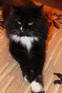 cat on area rug odor